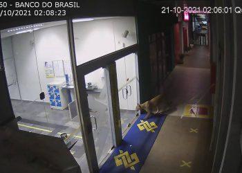 Imagens: Circuito de segurança/Ceasa Campinas